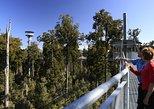 West Coast Tree Top Walk Experience. Greymouth, New Zealand