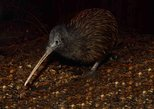Entrada para o Parque Kiwi Birdlife. Queenstown, NOVA ZELÂNDIA