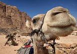 Sightseeing Tour to Petra from Amman, Aman, Jordan
