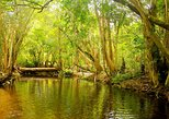 Private Half Day Tour: Exclusive World Heritage Rainforest and Waterfall Tour from Cairns, Cairns y el Norte Tropical, AUSTRALIA