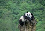 Beijing Private Tour to Beijing Panda House and Mutianyu Great Wall, Beijing, CHINA