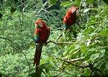 5-Day Madidi and Pampas Amazon from La Paz, La Paz, BOLIVIA