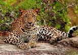 Yala National Park Private Safari trip from Galle/Unawatuna/Mirissa, Galle, Sri Lanka