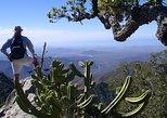 Sierra de la Laguna Biosphere Reserve Hike from Todos Santos. Todos Santos, Mexico