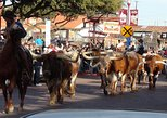 Half-Day Guided Best of Fort Worth Historical Tour, Dallas, TX, ESTADOS UNIDOS