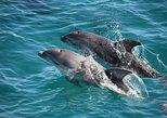 3-Hour Dolphin and Seal Sightseeing Cruise, Mornington Peninsula, Peninsula de Mornington, AUSTRALIA