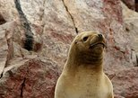 Paracas to Ballestas Islands Group Sailing Tour. Paracas, PERU