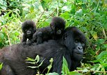 3 días de senderismo a Bwindi para ver gorilas. Kampala, UGANDA