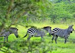 1 Day Lake Mburo Tour from Kampala. Kampala, UGANDA
