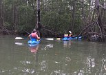 Kayak in the Mangroves of Damas from Manuel Antonio, Quepos, COSTA RICA