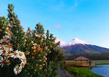 Cotopaxi Full-Day Tour from Quito Including Lunch. Quito, ECUADOR