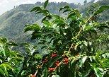 Blue Mountain Coffee and Sightseeing Tour. Kingston, JAMAICA
