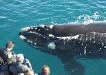 Augusta Whale Watching Eco Tour, Busselton, AUSTRALIA