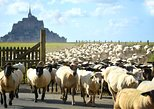 Mont Saint Michel Private Guided Walking Tour. Monte Saint-Michel, FRANCE