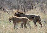 Excursión de 4 días a Safari Lodge desde Johannesburgo al Parque Nacional Kruger,