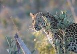 1 noche y 2 días de safari exprés en el Parque Nacional Kruger,