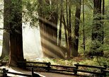 Custom Muir Woods and Napa Wine Tour From San Francisco, San Francisco, CA, ESTADOS UNIDOS