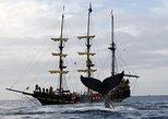 Cruzeiro em Navio Pirata para Observação de Baleias em Los Cabos com Café da Manhã. Los Cabos, MÉXICO