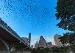 Excursión en kayak al avistamiento de murciélagos del puente de la avenida Congreso en Austin.. Austin, TX, ESTADOS UNIDOS
