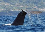 Avistamiento de ballenas. Terceira, PORTUGAL