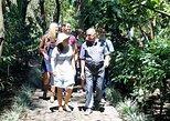 San Jose to Herida City and Coffee Plantation Tour by Train,