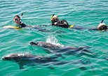 Swim with Dolphins Day Trip from Perth. Perth, AUSTRALIA