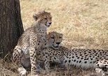 Serengeti Safari - Tanzania, Arusha, TANZANIA