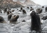 Visite os leões-marinhos nas Ilhas Palomino, em Lima, Peru, Lima, PERU