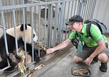 Chengdu Panda Rescue Center Volunteer for a Day Experience. Chengdu, CHINA