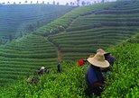 Excursão privada de chá à plantação de chá de Mengdingshan em Chengdu. Chengdu, CHINA