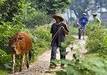 1 day Yangshuo Countryside Cycling Tour. Yangshuo, CHINA