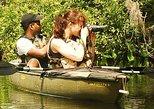 Mangrove Tunnel Kayak Eco Tour, Naples, FL, ESTADOS UNIDOS