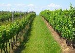 Excursão vinícola particular guiada com degustação e almoço,
