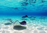 Encontro com arraias e tubarões, snorkel, piscina natural, barco com fundo de vidro em Punta Cana. Punta de Cana, REPÚBLICA DOMINICANA
