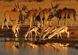 Excursão de 5 dias exclusiva em Namíbia saindo de Windhoek,