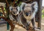 Cleland Wildlife Park Tour desde Adelaide con el monte. Cumbre alta. Adelaida, AUSTRALIA