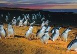 Phillip Island Australian Wildlife Viewing Tour from Melbourne. Melbourne, AUSTRALIA