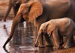 Safari a la Reserva Natural de Pilanesberg y excursión de un día a Sun City. Johannesburgo, SUDAFRICA