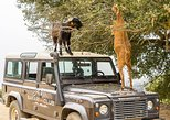Full-Day Land Rover Safari from Heraklion with Lunch. Heraclion, Greece