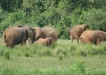 Experience Murchison Falls 3 days safari, Kampala, UGANDA