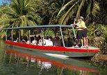 Damas Island Mangrove Boat Tour from Manuel Antonio, Quepos, COSTA RICA