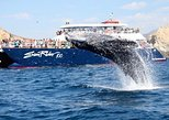 Los Cabos Whale Watching Brunch Cruise. Los Cabos, Mexico