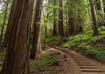 Muir Woods and Sausalito Half Day Tour (Optional Sausalito Ferry Ticket). San Francisco, CA, UNITED STATES