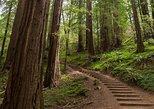 Excursão de meio dia para Muir Woods e Sausalito (ingresso para a balsa de Sausalito opcional). San Francisco, CA, ESTADOS UNIDOS