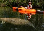 Self-Guided Kayaking Manatee and Dolphin Tour. Cape Canaveral, FL, UNITED STATES
