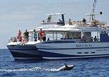 Cruzeiro de observação de baleias e golfinhos em Gran Canária com opção de mergulho. Tenerife, Espanha