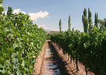 Tour of the wine cellars in Mendoza with the La Carrodilla church, Mendoza, ARGENTINA