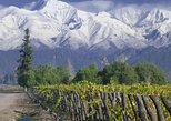 Full Day Tour: Culture of Wine in Mendoza, Mendoza, ARGENTINA