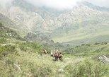 Horseback Riding in Potrerillos from Mendoza (Full Day), Mendoza, ARGENTINA