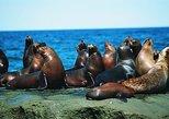 Excursión a Punta Loma con leones marinos desde Puerto Madryn, Puerto Madryn, ARGENTINA